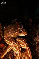Afraid of the dark , Common Crab , Sony Rx 100 by Jp Meistre
