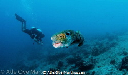 Fish and diver - wide angle shot. The fish came so close ... by Atle Ove Martinussen