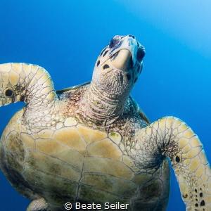 Turtle by Beate Seiler