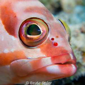 Grouper by Beate Seiler