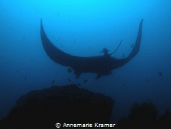 A large population of Manta Rays has been documented to r... by Annemarie Kramer