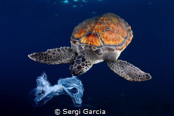 The similar appearance between plastic bags and jellyfish... by Sergi Garcia
