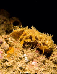 Its a shrimp very small one .. I saw it when i was taking... by Khalid Obaid Ahmad