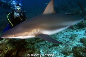 Shark Dive in Roatan by Rickey Ferand