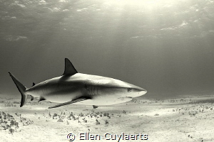 Again no real photoshop but grey & sepia conversions in A... by Ellen Cuylaerts