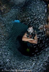 Swim Through  /  Summertime brings silversides in abundan... by Pam Murph