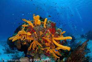 A Burst of Color  / The colors in Cozumel are amazing and... by Pam Murph