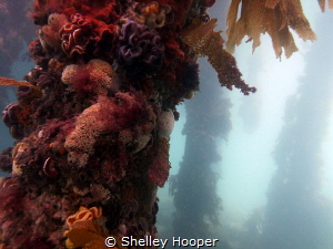 Beautiful colours to be seen on the posts of Portsea Pier... by Shelley Hooper