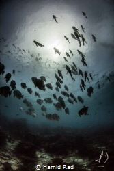 The Bat Squad. Canon 600D/Tokina 10-17/Nauticam. by Hamid Rad