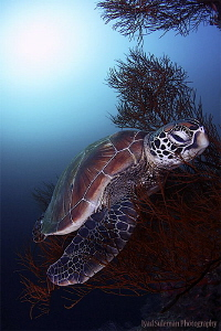 Lovely turtle by Iyad Suleyman