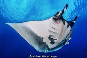 really a big one ... by Michael Weberberger