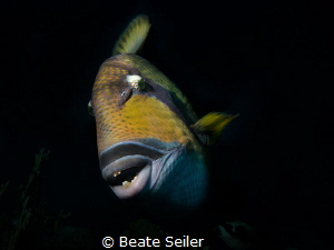 Triggerfish by Beate Seiler