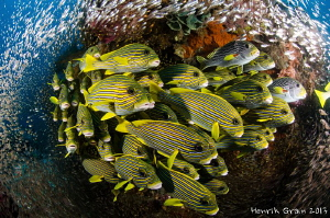 Sweetlips up Close by Henrik Gram Rasmussen