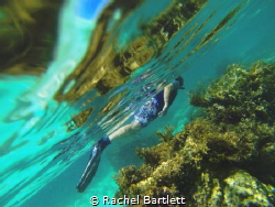 This shot is of my husband whilst we were snorkelling on ... by Rachel Bartlett