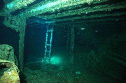 Thistlgorm Location: Sha'ab Al, Red Sea Depth: 30m Cam... by Stevan Filipovich