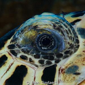 Wisdom Detail of a hawskbill turtle's eye by Ellen Cuylaerts
