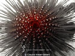 sea urchin abstract by Claudia Weber-Gebert