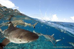 Half and half photo (Half-and-half, split shot) of reef s... by Frank Schneider