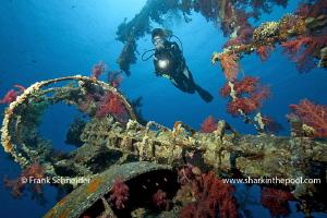"Diver at wreck ""Cedar Pride""; Model: Giovanna; Nikon D3, ... by Frank Schneider"