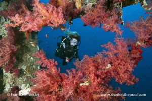 Model and soft corals; Model: Giovanna; Nikon D3, Zoom f2... by Frank Schneider