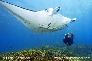 Model and Manta; Model: Ursula; Nikon D3, Zoom f2.8/14-24... by Frank Schneider