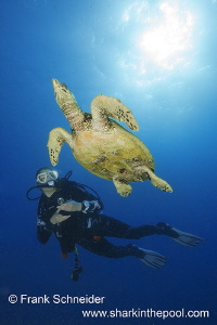 Model and turtle; Model: Carina; Nikon D3, Zoom f2.8/14-2... by Frank Schneider