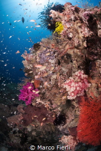 Soft Coral & Anthias in Wakatobi by Marco Fierli