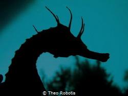Hippocampus by Theo Robotis