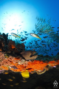 """In a way an over under of a section of reef found at """"Doo... by Allen Walker"""