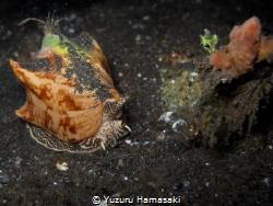 slow but deadly by Yuzuru Hamasaki