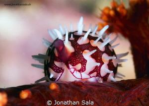 lovely by Jonathan Sala