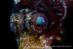 Eye of the Dwarf Lion Fish by Henrik Hedegaard