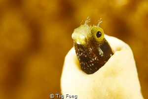 Even Closer - another of a series of this photogenic litt... by Tig Fong