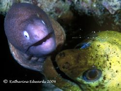 These 2 eels were clearly living in domestic bliss undern... by Katherine Edwards