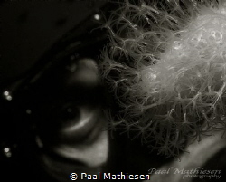 Eye by Paal Mathiesen