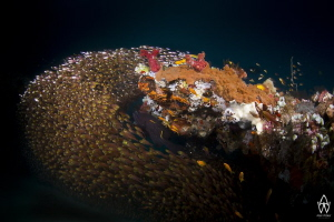 Had an amazing dive in Sodwana on a reef called Roonies, ... by Allen Walker