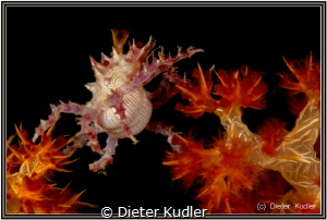 The Jump by Dieter Kudler