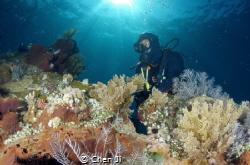 Divers at Liberty Wreck by Chen Ji