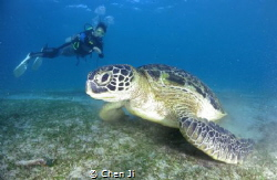 Diver and turtle by Chen Ji