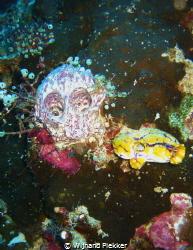 Coral of doom ! by Wijnand Plekker
