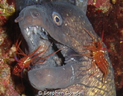 Moray, having his teeth cleaned by Stephen Cowdell