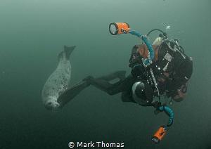 Playful seal - Farne Islands. by Mark Thomas
