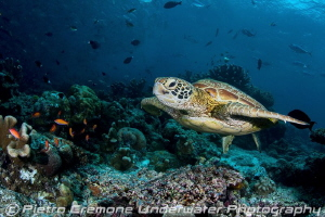 Turtle and Jacks by Pietro Cremone