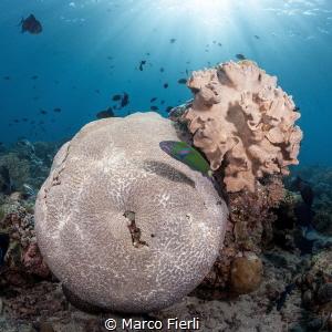 Reef Top by Marco Fierli