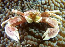 crab by Chen Ji
