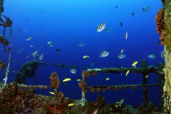 Assorted species on the wreck of the Jane C. Nikonos V, 2... by Matthew Shanley