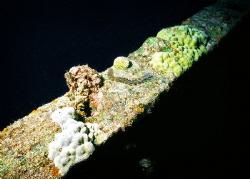 Worm on Ship Wreck railing. by Robert Fleckenstein