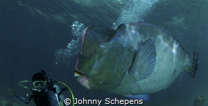 follow Ramil......best dive guide in Sipadan by Johnny Schepens