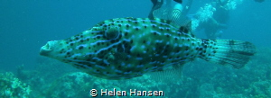 file fish by Helen Hansen