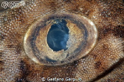 Pigmy wobbegong shark eye wide open... taken using a 105m... by Gaetano Gargiulo
